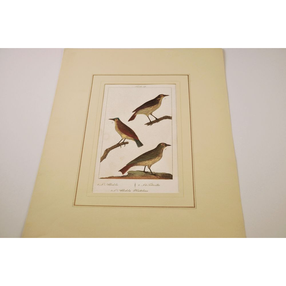 Antique Bird Engraving Hand-Colored Authentic Birds Wood Copper ...