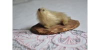 Bébé phoque en fourrure sur plaque décorative