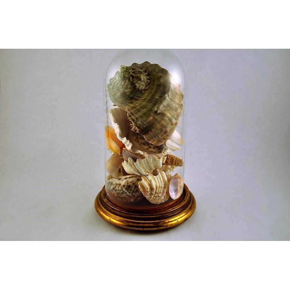 Que Mettre Sous Une Cloche En Verre dôme de verre victorien avec collection de coquillages