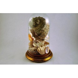 Cloche en verre antique contenant une collection de coquillages