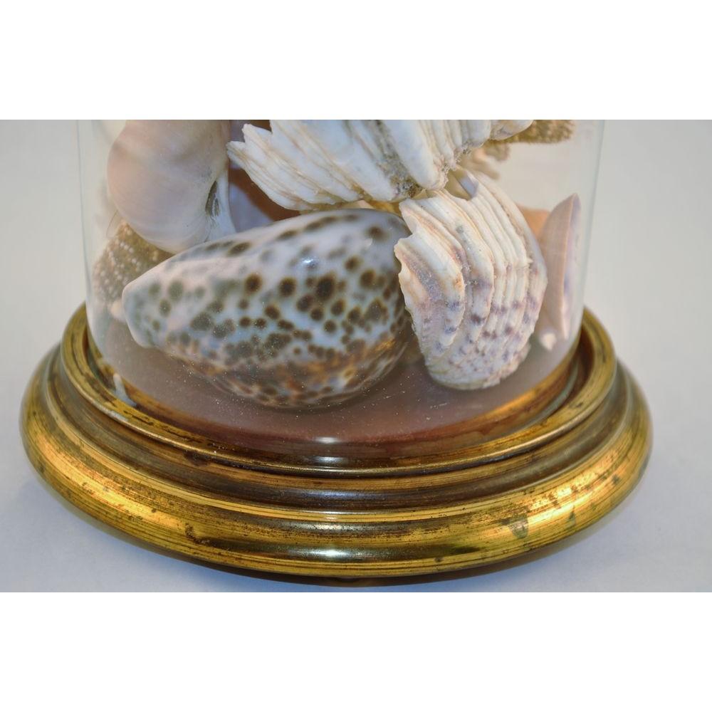 Victorian sea shells display in antique glass dome globe for Cloche verre decorative