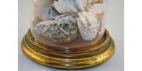 Cloche en verre antique contenant une collection de coquillages