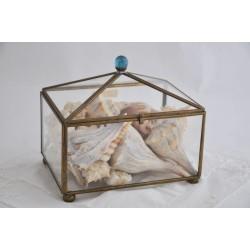 Boîte de coquillages marins en verre et laiton